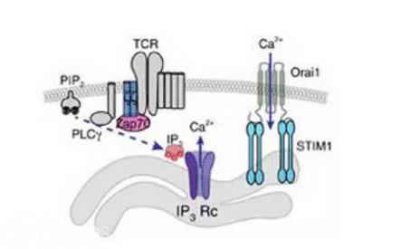 Nature子刊:瞄准肿瘤 用光亮指引T细胞去战斗!