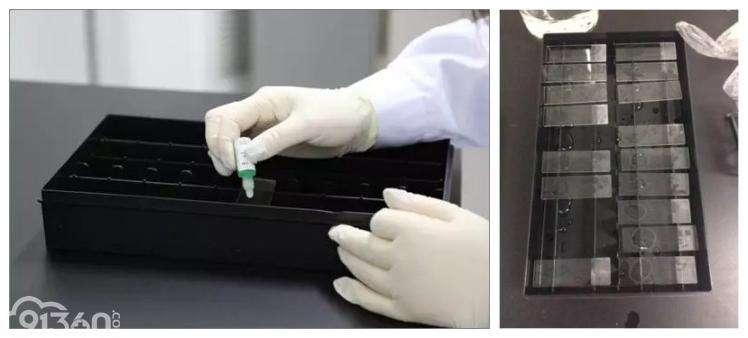 免疫组织化学染色