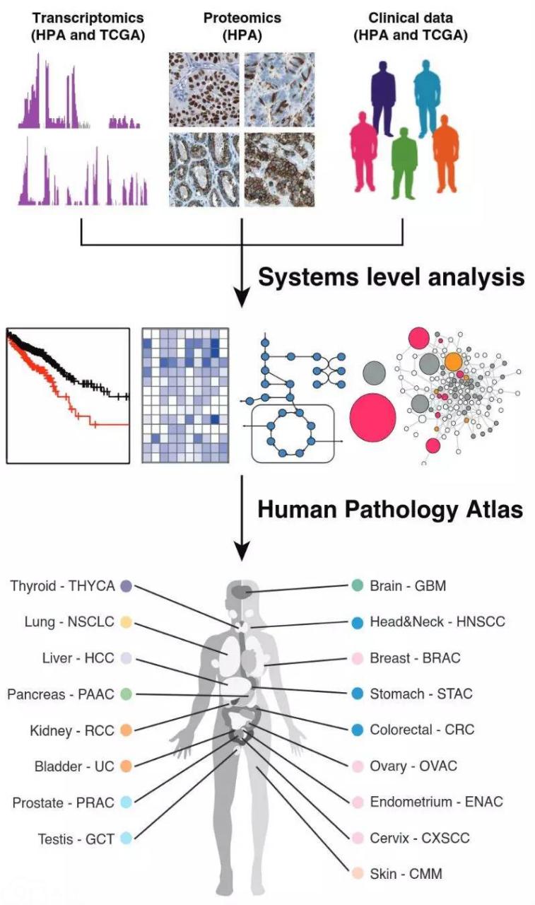 """科学家发布人类癌症病理图谱:""""大数据""""引领下的个体化医疗"""