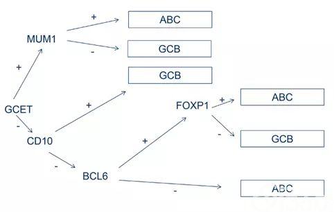 图文解析弥漫大B细胞淋巴瘤(DLBCL)