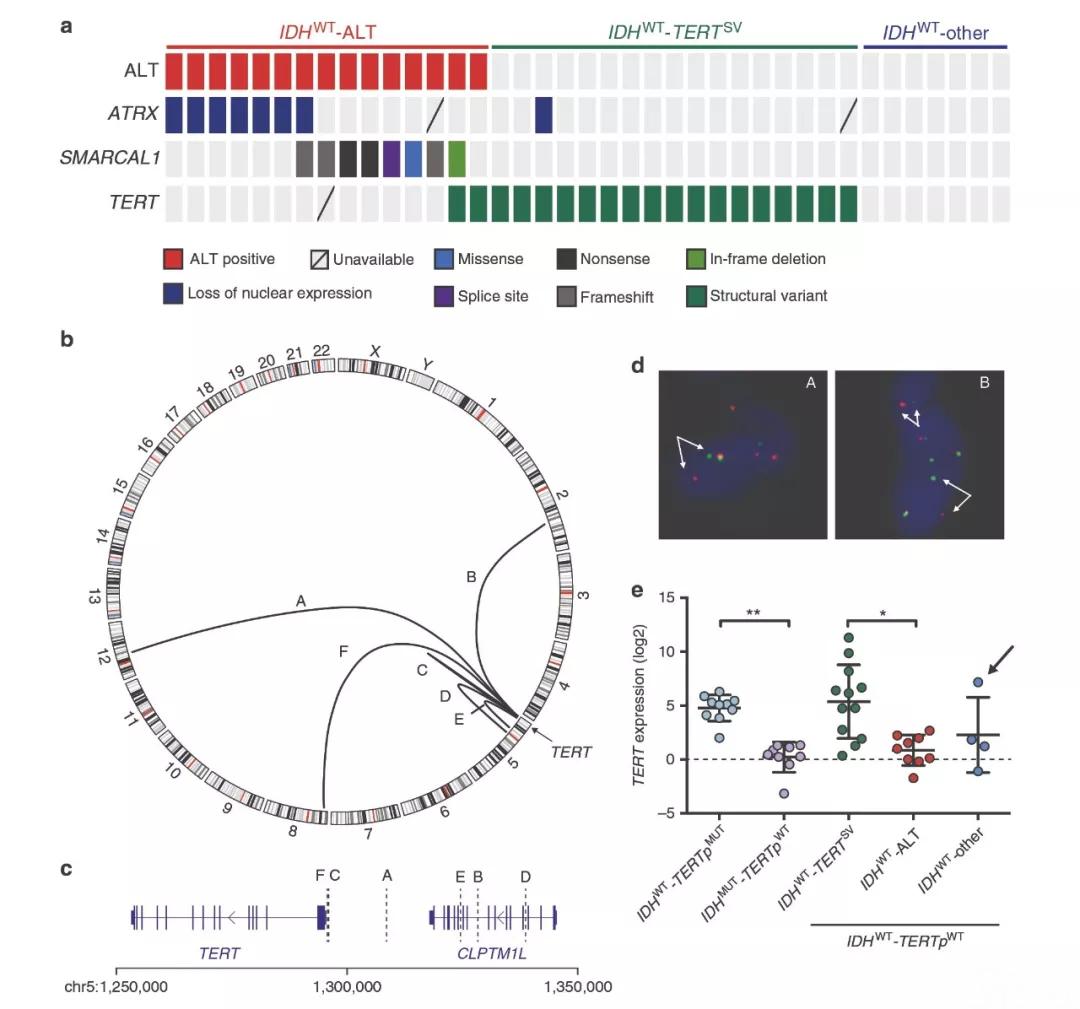胶质母细胞瘤基因图谱绘制完成!泛生子科学家研究成果登上Nature子刊