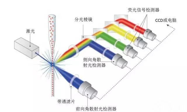 一图读懂流式细胞仪