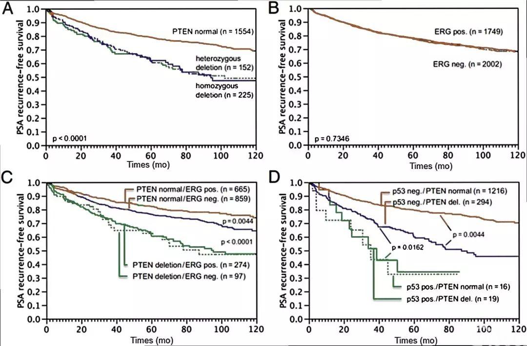 前列腺癌:分子病理学和临床意义的更新