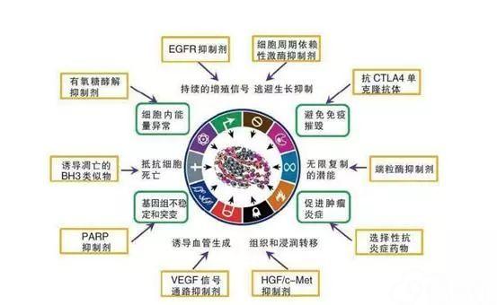 【综述】肿瘤发病机制:从肿瘤微环境到肠道微生物(上)