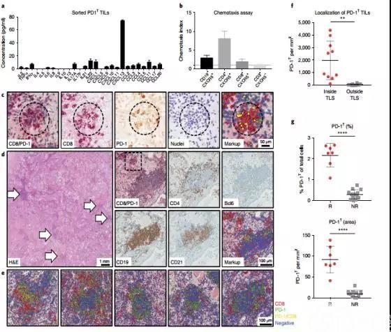 重大突破!PD-1竟可预测肺癌免疫治疗生存期?。麼ature子刊