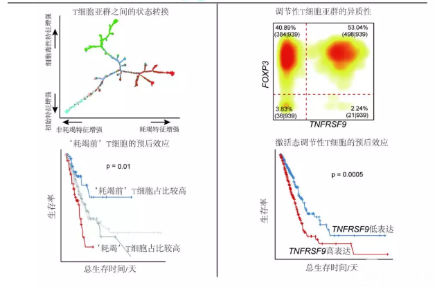 Nature Medicine:张泽民研究组与合作者发表单细胞水平的肺癌 T 淋巴细胞免疫图谱