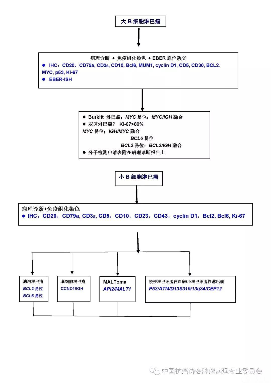 B细胞淋巴瘤病理诊断流程