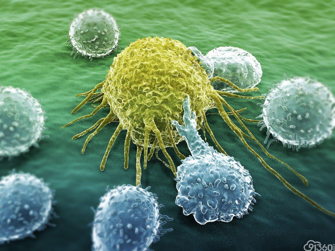 """《自然》:科学家首次证实,肿瘤中存在大量与癌症不相关的""""吃瓜""""杀伤性T细胞,难怪有些患者对免疫治疗没反应"""