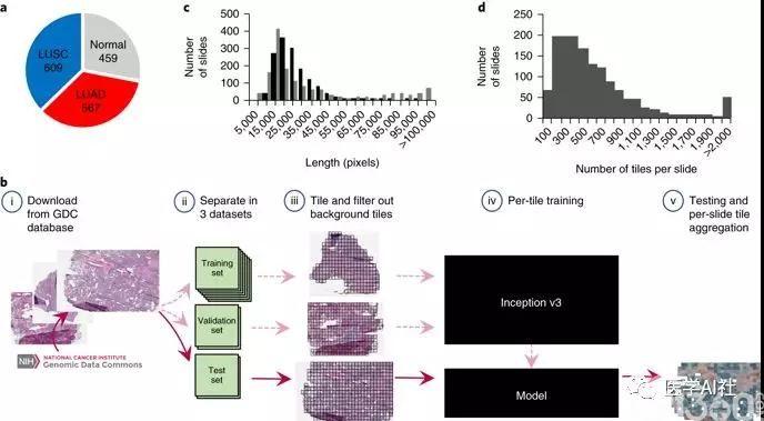 深度学习对非小细胞肺癌病理切片的分类和突变基因预测
