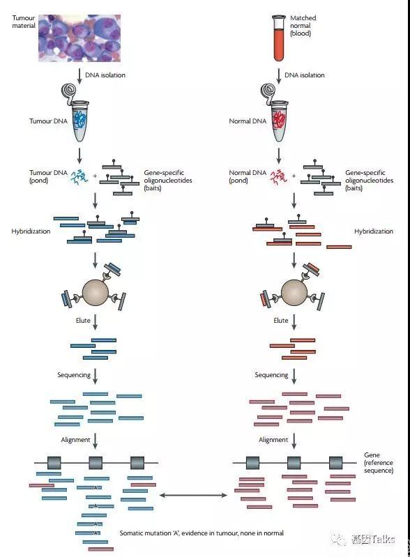肿瘤基因检测必须知道的十问十答!