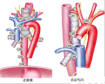食管癌诊疗规范(2018年版)